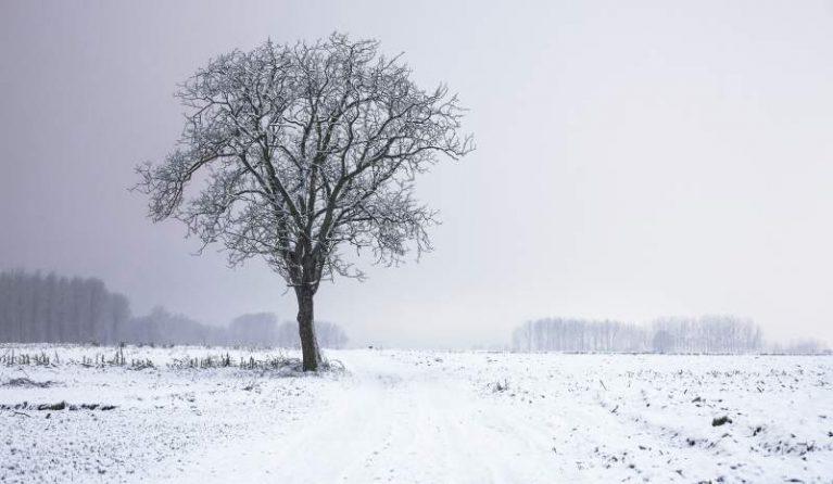 Cold snow landscape